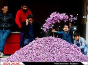 راه اندازی بزرگترین بازار گل زعفران شرق کشور در تربت حیدریه