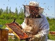 همدان  سالانه بیش از ۲ هزار تن عسل تولید میکند