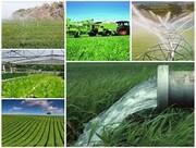 بهره برداری از ۷۹ پروژه بخش کشاورزی در استان یزد در ایام الله دهه فجر