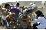 واکسیناسیون ۳۴۰ هزار رأس دام سبک و سنگین در استان یزد