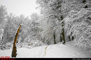 طبیعت زیبای پارک جنگلی توسکا چشمه در مازندران