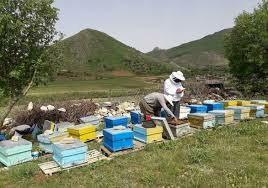 صنعت زنبورداری