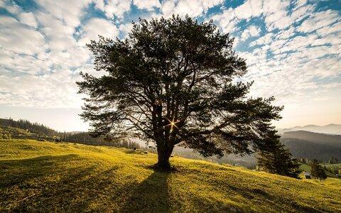 روزه درخت کاری
