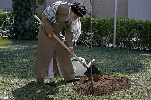 رهبر معظم انقلاب اسلامی به مناسبت روز درختکاری دو نهال میوه غرس کاشتن.