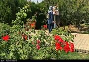 باغِ بانوان در مشهد افتتاح می شود