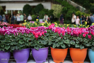 رئیس انجمن صنفی تولیدکنندگان گل و گیاه مشهد
