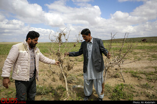 ده هکتار از باغهای پسته این روستا پس سیل تخریب شده است.