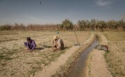 سیستان و بلوچستان تشنه مدیریت آب