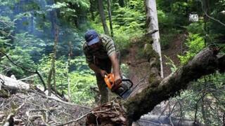 جنگل بان
