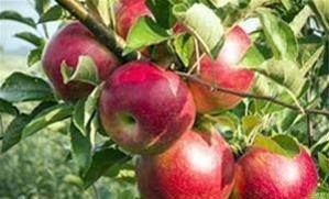 مدیر تنظیم بازار سازمان جهاد کشاورزی خراسان رضوی