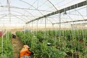 همدان ۱۱۱ هکتار گلخانه دارد