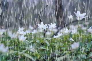 بارش های رگباری