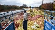 فروش سیب کنار جاده ممنوع/«وضعیت زرد» سیب سرخ آذربایجان