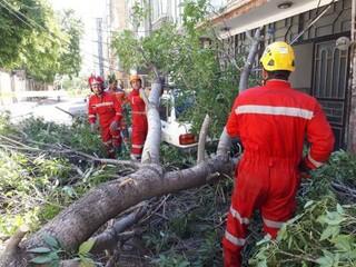سقوط درخت