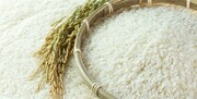 تصمیم ممنوعیت واردات برنج؛ خطا یا تصحیح اشتباه