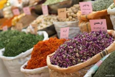 گیاهان دارویی ثروت سبزی که در دل کویر رهاشده است