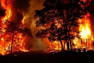 آتش سوزی میانکاله