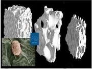 ظرفیت علمی مشهد برای ساخت بافتهای بدن انسان