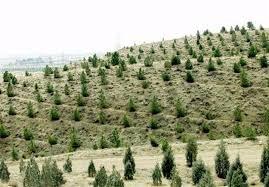 جنگل دست کاشت