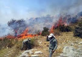 آتش سوزی در ارتفاعات طرق