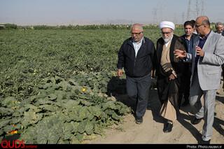 بازدید تولیت آستان قدس رضوی از مزرعه نمونه