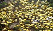 ۱۰هزار تاکسی فرسوده در کشور نوسازی میشود