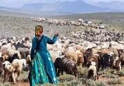 ۳۵میلیون هکتار از مراتع کشور در اختیار عشایر قرار دارد