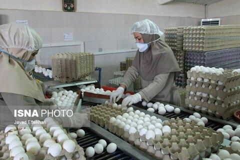 راه اندازی زنجیره تولید در استان