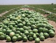 اقتصاد کشاورزی در حسرت الگوی کشت/عرضه و تقاضا نیازسنجی می طلبد