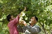اگروتوریسم حلقه مفقوده اقتصاد کشاورزی گیلان