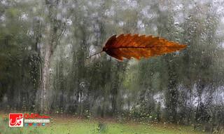 پاییز باران پاییزی