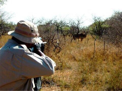 شکار گوزن