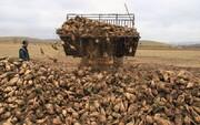 کشاورزان چغندرها را به کارخانهها تحویل دهند