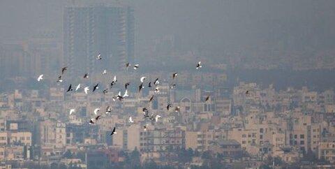 هواي تهران