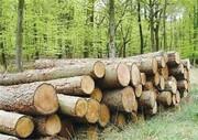 افزایش قاچاق چوب بااجرای نادرست طرح تنفس جنگلهای هیرکانی