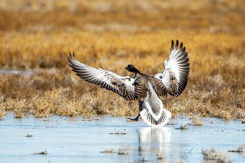آنفلوانزا پرندگان