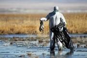 «تالاب میانکاله» پناهگاهی که بی پناه مانده است/مرگ دسته جمعی پرندگان در هاله ای از ابهام