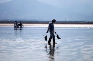 مرگ پرندگان تالاب میانکاله