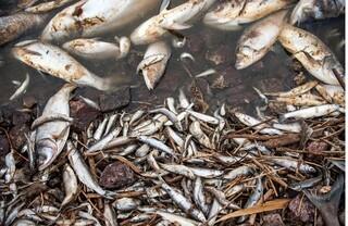 ماهیهای گرفتار در گودالها
