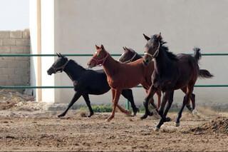 پرورش دهندگان اسب