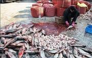 برخورد قاطع با فروشندگان دورهگرد آبزیان در یزد