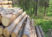 قطع درختان در آذربایجان غربی «قاچاق» یا «تجارت»؟