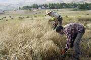 چشم کشاورزان جنوب کرمان به حمایتهای دولتی دوختهشده است