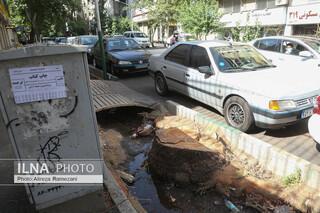 درخت های خیابان فلسطین
