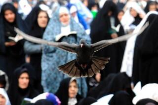 حمید هاشمی