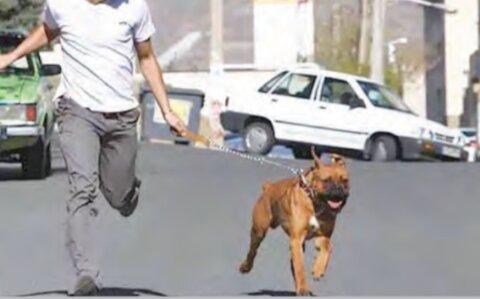 سگ گردانی