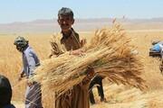قیمت خرید تضمینی گندم خواب از چشمان کشاورزان ربوده است