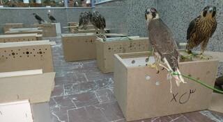 قاچاق پرندگان