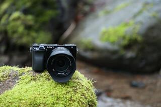 عکاس طبیعت