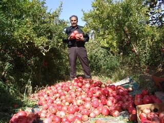 مدیر جهاد کشاورزی گناباد